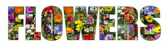 Colagem original da coleção das flores imagens de stock royalty free
