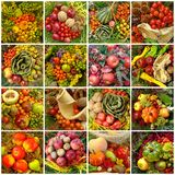 Colagem outonal da colheita Foto de Stock Royalty Free