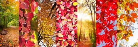 Colagem panorâmico das folhas de outono e das paisagens da natureza Fotografia de Stock Royalty Free