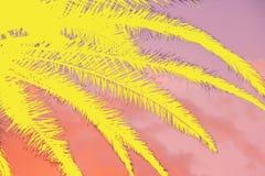 Colagem tropical do por do sol e do fundo vívido das folhas de palmeira imagens de stock royalty free
