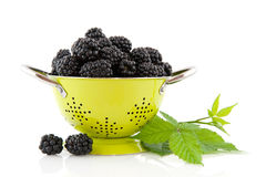Colander with brambles Royalty Free Stock Photo