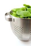 Colander gefüllt mit frischem Spinat stockbild