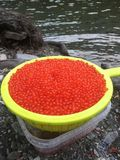 Colander with red caviar stands by river stock photography