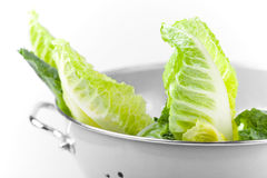 colander sałatka świeża zielona Obraz Royalty Free