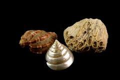 Colar, coral, p?rolas e escudos em um fundo preto fotos de stock