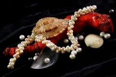 Colar, coral, p?rolas e escudos em um fundo preto imagem de stock