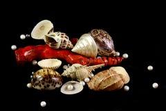 Colar, coral, p?rolas e escudos em um fundo preto imagens de stock royalty free