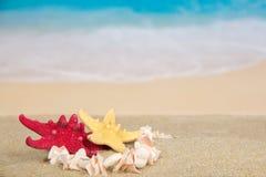 Colar e estrelas do mar na costa de mar Imagem de Stock
