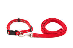 Colar e trela de cão Imagem de Stock Royalty Free