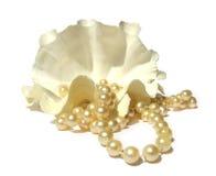 Colar perolado, grandes grânulos do coral dos shell Fotografia de Stock Royalty Free