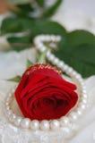 Colar vermelha de Rosa e de pérola Fotos de Stock
