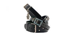 Colares de cão de couro pretos - isolados Foto de Stock