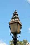 Colares em uma lanterna da rua de Key West Fotografia de Stock
