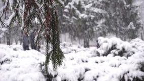 Colate del gelo dei rami di legno video d archivio