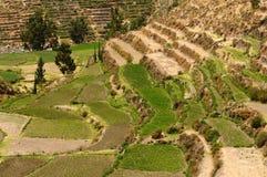 Colca谷,秘鲁 库存照片