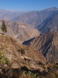 Colca Canyon Royalty Free Stock Photo