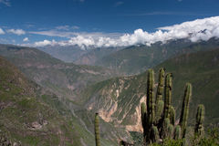 Colca Canyon. Seen from its top down into the valley Royalty Free Stock Image