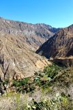 The Colca Canyon Oasis stock images