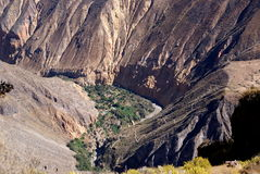 Colca canyon, oasis Sangalle,  Peru Royalty Free Stock Photography