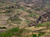 Colca Canyon In Peru Royalty Free Stock Photos
