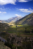 Colca Canyon, Peru. Colca Canyon not far from Chivay village, Peru Royalty Free Stock Photo