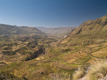 Colca Canyon in Peru Stock Photography