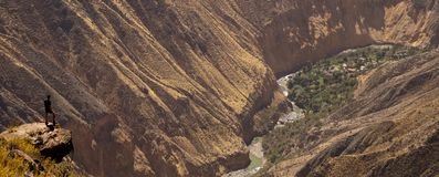 Colca Canyon in Peru. Pretty Amazing view down to the Oasis and the Canyon from that spot stock image