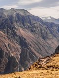 Colca canyon in Peru, panoramic view point royalty free stock images