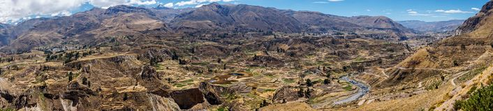 Colca Canyon, Peru. Panoramic view of teraces built by pre-inca society Stock Images