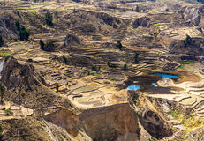 Colca Canyon, Peru,South America. Incas  to build Farming terraces  with Pond and Cliff. One of the deepest canyons in the wor Stock Image