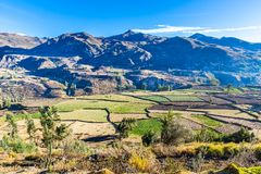 Colca Canyon, Peru,South America.  Incas to build Farming terraces with Pond and Cliff. Royalty Free Stock Photo