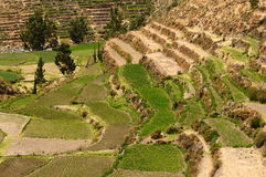 Colca Dolina, Peru Zdjęcie Stock