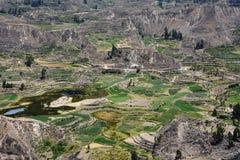 Colca dolina w Peru Obraz Royalty Free