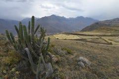Colca jar, Chivay, Peru Zdjęcie Royalty Free