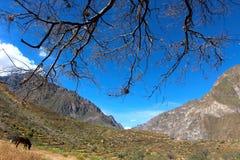 Colca jaru dolina Zdjęcie Stock
