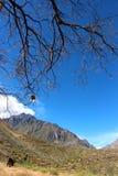 Colca jaru dolina Obraz Stock
