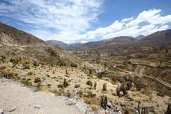 Colca kanjon   Arkivfoto