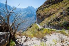 Colca kanjon En av de djupaste kanjonerna i världen arkivfoto