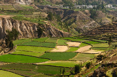 colca Peru dolina Obraz Stock