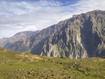 Colca-Schlucht, Arequipa, Peru. lizenzfreies stockbild