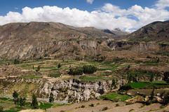 Colca Tal, Peru Lizenzfreie Stockfotos