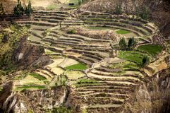 Colca valley Stock Images