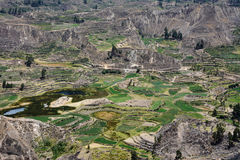 Colca valley in Peru. Royalty Free Stock Image
