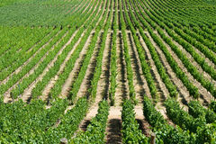 Colchagua Valley Stock Photography