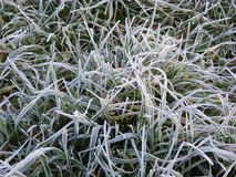 Cold. Frosen grass on a cold morning Royalty Free Stock Image