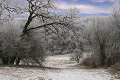 Cold. And clear scene wintertime Royalty Free Stock Photography