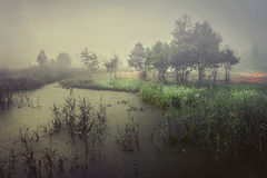 Cold autumn on marsh in foggy gray morning. Autumn landscape of wildlife on river. Trees in fog and bad cloudy weather. Sentimental melancholic landscape of royalty free stock images