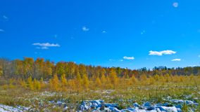 Cold autumn in Minnesota. Bright colors after snow fall is very beautiful scene royalty free stock photos