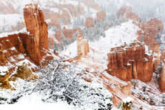The cold beauty of Bryce Canyon in winter Stock Images
