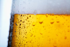 Cold beer. Fresh  beer with froth and condensed water pearls Stock Photography